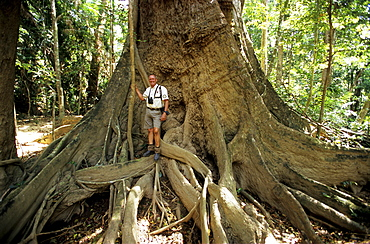 Man standing in front of a huge tree, Rainforest in the Iron Range National Park, Queensland, Australia