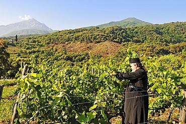 Monk Epifanios, Wine-grower, Moni Mylopotamos, Athos mountain, Chalkidiki, Greece
