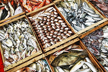 Fish in boxes, Ouranopoli, Chalkidiki, Greece
