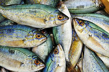 Fish, Ouranopoli, Chalkidiki, Greece