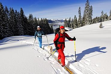 People ski touring through snowy landscape, Duerrnbachhorn, Reit im Winkl, Chiemgau, Upper Bavaria, Germany, Europe