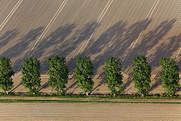 Aerial view of farm track parallel to trees, ploughmans furrows, patterns in the field, Lower Saxony, Germany