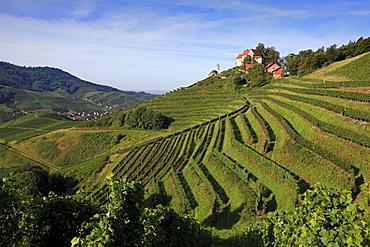 Staufenberg castle, near Durbach, Ortenau region, Black Forest, Baden-Wuerttemberg, Germany