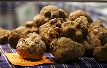 White Truffles, Truffle Fair, Alba, Langhe, Piedmont, Italy