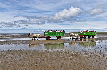 Journey over the mudflats towards Hallig Suedfall, Fuhlehoern on North Beach, Wadden sea, Schleswig-Holstein, Germany