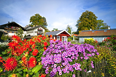 Garten of a farmhouse, Fraueninsel, Chiemsee, Chiemgau, Upper Bavaria, Bavaria, Germany