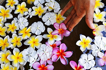 Flowers at the Spa of Shanti Maurice Resort, Souillac, Mauritius, Africa