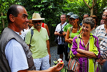 Guided tour in the parfume and spice garden of Saint Philippe, La Reunion, Indian Ocean