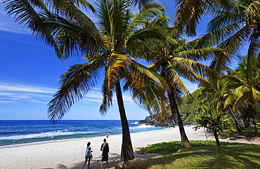 Palm trees on the beach of Grand Anse in Petite Ile, La Reunion, Indian Ocean