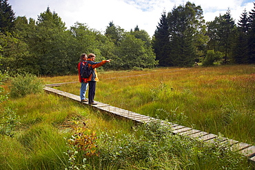 Upland-moor Hohes Venn near Muetzenich, Eifel, North Rhine-Westfalia, Germany, Europe