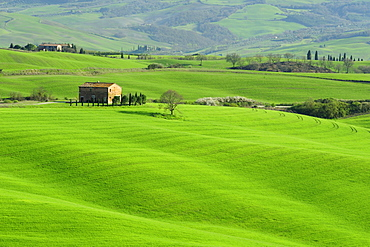 Country house on hilly meadows, Val d¥Orcia, UNESCO World Heritage Site Val d¥Orcia, Tuscany, Italy