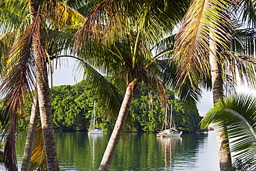 Sailing Boats anchor near Island, Suva Harbour, Viti Levu, Fiji