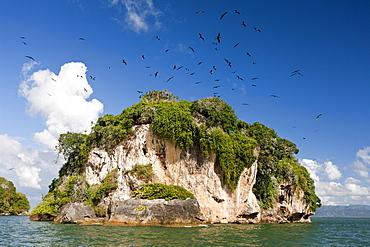 Bird Island La Cacata, Los Haitises National Park, Dominican Republic