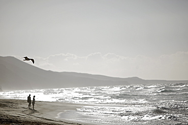 Couple at beach, Fuerteventura, Spain