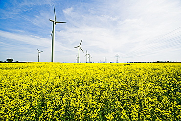 Renewable energies, windfarm in a rape field, Schleswig Holstein, Germany, Europe