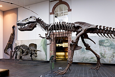 Senckenberg-Museum, view of into the the dinosaur hall, Frankfurt am Main, Hesse, Germany, Europe