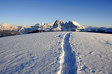 Traces in snowy mountain landscape in the evening sun, Alpe di Siusi, Langkofel, Alto Adige, South Tyrol, Italy, Europe