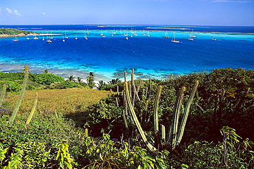 View at boats in a bay in the sunlight, Horseshoe Reef, Tobago Cays, St. Vincent, Grenadines, Carribean, America