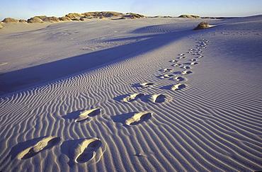 Footprints in the sand, Rabjerg Mile, Jutland, Denmark