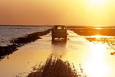 Crossing Mando Dam at Sunset, Wadden Sea at Low Tide, Near Mando, Denmark