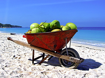 Coconuts in a pushcart on the beach, Carribbean Beach, Cartagena, Colombia, South America