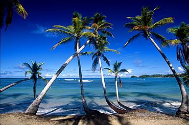 Palm trees along the beach at Playa Cacao in Las Terrenas, Samana Peninsula, Dominican Republic, Antilles, Caribbean