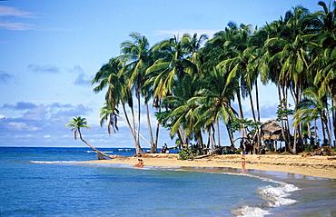 Palm beach, Playa Bonito in Las Terrenas, Dominican Republic, Antilles, Caribbean