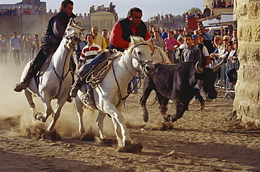 Celebration of the Bulls of the Camargue, Aigues-Mortes, Gard, Provence, France