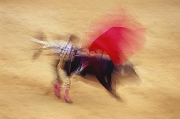 Torrero and bull at a bullfight, Corrida de Toros, Jerez de la Frontera, Cadiz, Andalusia, Spain, Europe