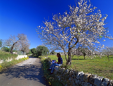 Person enjoying a rest beneath a blossoming almond tree, Palma de Mallorca, Mallorca, Spain