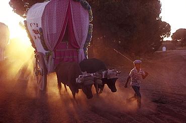 Boy leading an ox carriage, sanddust, RomerÃŒa al RocÃŒo, El RocÃŒo, pilgrimage, Andalusia, Spain
