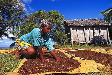Woman desiccating cloves, Ste Marie, Madagascar