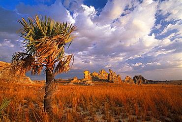 Single palm tree and rocks, Isola NP, Madagascar