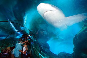 Aquarium with Sharks, Loro Parque, Puerto de la Cruz, Tenerife, Canary Islands, Spain