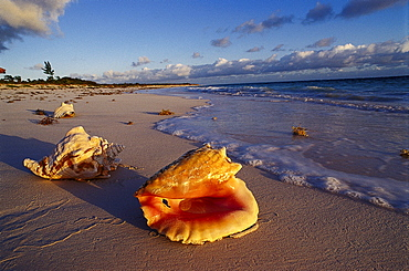 Beach with Shells, Bahamas