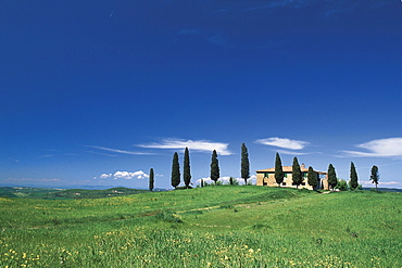 Meadow with Cypresses and country house, Tuscany, Italien