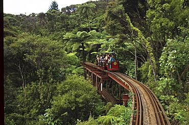 People driving by Creek Railway through rainforest, Coromandel Peninsula, North Island, New Zealand, Oceania