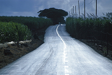 Country road amidst sugar cane fields, Mauritius, Africa