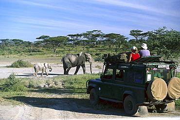 African Elephants, Jeep Safari, Serengeti National Park, Tanzania, Africa