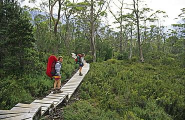 Walkers on 5-day Overland Track, Overland Track, Cradle Mountain-Lake St Clair National Park, Tasmania, Australia