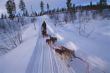 Husky dog sled with driver in Sweden, Skandinavia