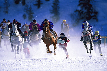 White Turf Skijoring, St. Moritz, Engadin, Grisons, Switzerland