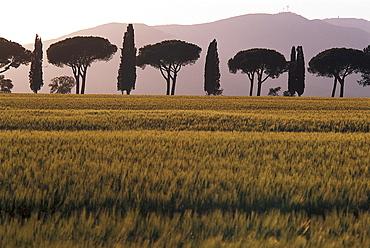Maremma near Grosseto, Tuscany, Italy