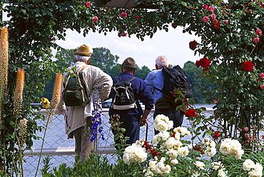 Three mature men at a rosegarden at Rhine promenade, Eltville, Rheingau, Hesse, Germany, Europe