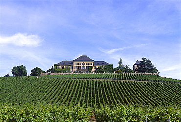 Castle Johannisberg on a vineyard, Rheingau, Hesse, Germany, Europe