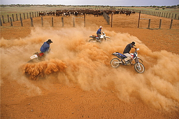 stockmen on motorbikes in dust, Quinyambie Station, South Australia, Australia