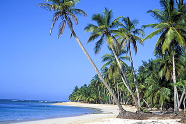 Palm beach Las Terrenas, Dominikanische Republik, Caribbean, America