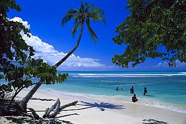 Palm beach, Coconut palms, Pigeon Point, Tobago, West Indies, Caribbean
