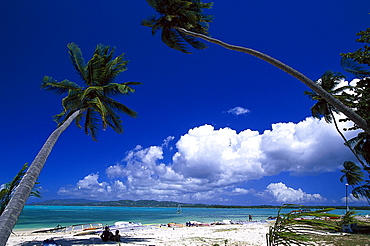 Palm beach, Coconut palms, Windsurfing, Pigeon Point, Tobago, West Indies, Caribbean