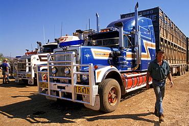 Road train, Cattle trucking, Lansdowne Station, Kimberley, Western Australia, Australia